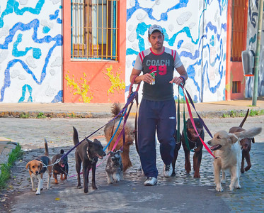 BA118   Pasea Perros (dog walkers) are now undeniably a part of the Argentine experience, and perhaps a barometer of the local economy.  More dogs per pasea perro means the local economy is strong; fewer signifies hard times.         Pasaje Lanin area at the beginning of the southern neighborhoods in the capital..