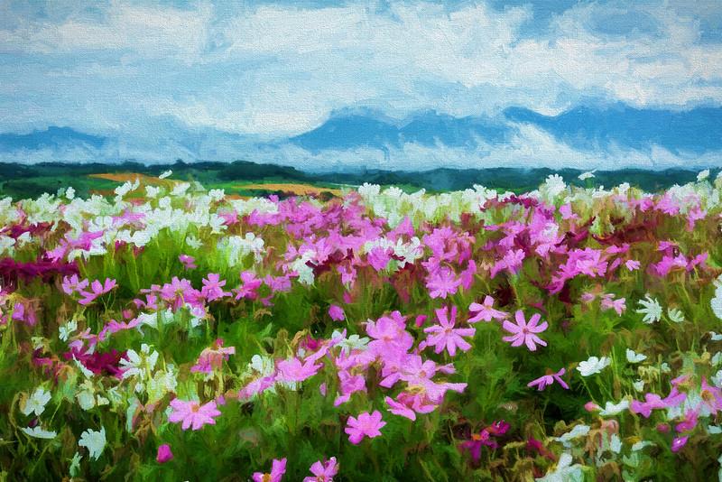 Hokkaido Flower Field