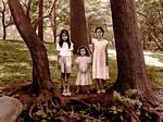Three Sisters, Three Trees