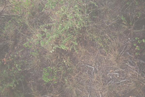 Raptors View in 2006/7