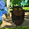 The sweet little owl peeks out of the beautiful Hydrangeas.