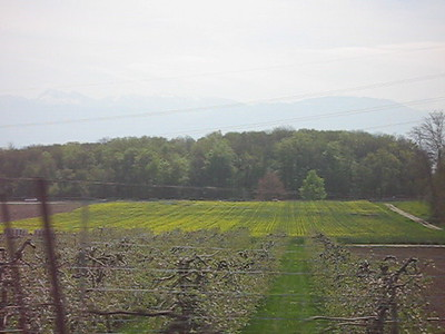 Rue des vignobles