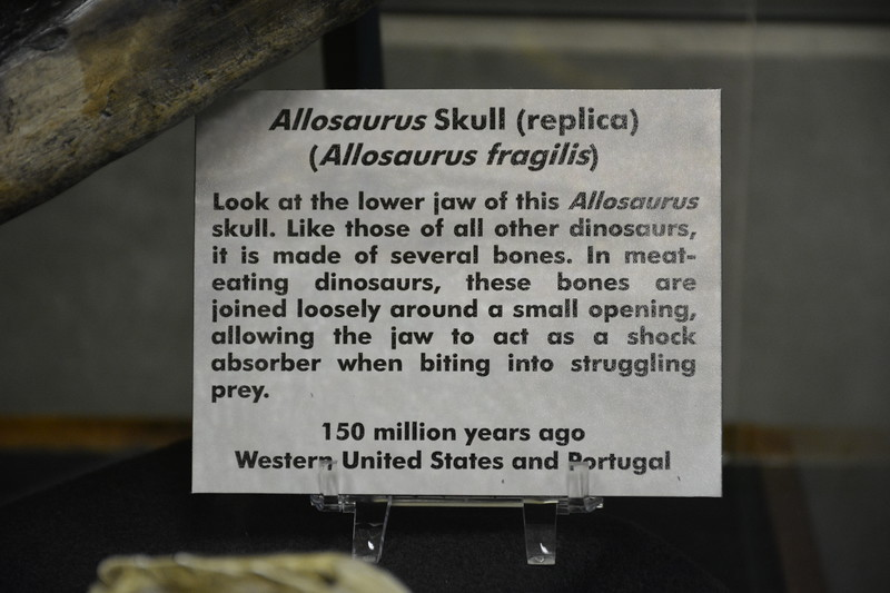 Allosaurus Skull Tag
