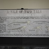 Tale of Two Tails