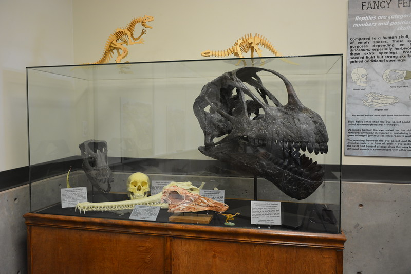 Skulls Display 2