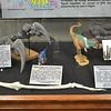 Allosaurus, Tyrannosaurus, Othnielosaurus, and Eagle Hands