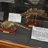Skeletons Display Case 2