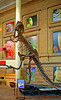 Dinosaur skeleton: Skeleton of tyrannosaurus rex, a huge meat eating dynosaur of the Cretaceous period that grew over 40 feet long and 20 feet tall, with large sharp teeth and claws. Main entrance hall, Museum of Nature and Science, Denver, Colorado 2005.