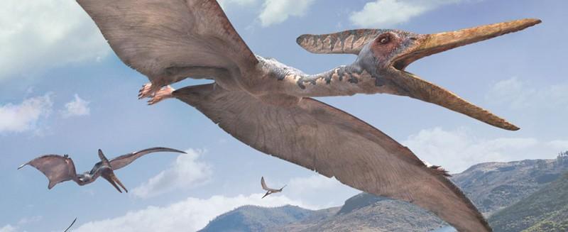 Pteranodon-WWD-L.jpg