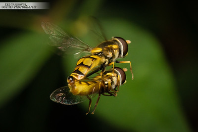 Mile High Hover Fly Club