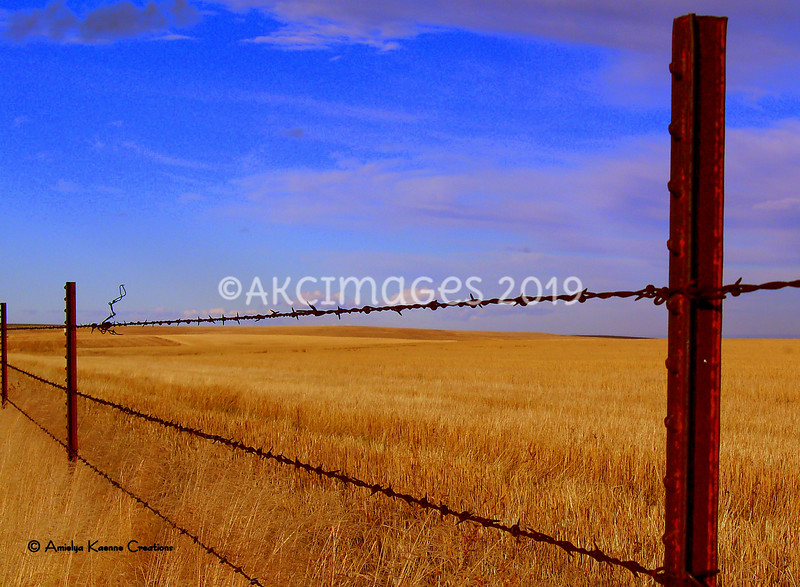 'Fence Line 1'
