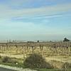 Bakersfield area vineyards.