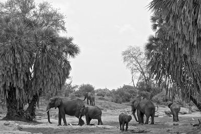 Kenya.Card3.02.2014 395
