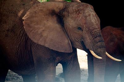 Kenya.Card3.02.2014 301
