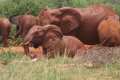 Kenya.Card3.02.2014 357