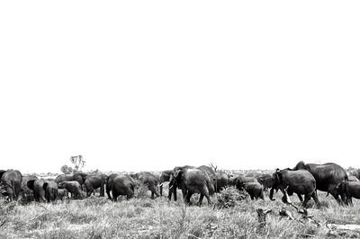 Kenya.Card3.02.2014 339