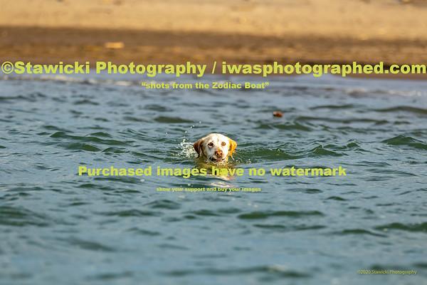 Dog's @ The HR Sandbar 10 17 2020-4533
