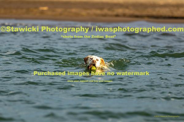 Dog's @ The HR Sandbar 10 17 2020-4535