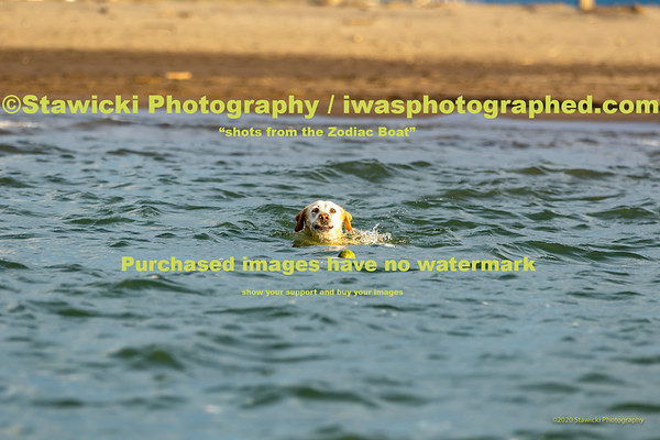 Dog's @ The HR Sandbar 10 17 2020-4532