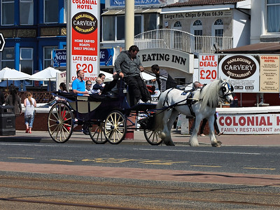 A horse & carriage near the Waterloo Road stop on the 26th May 2013