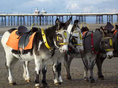'Joe', 'Jimmy' and 'Danny' on the beach near Blackpool Tower on the 6th November 2010