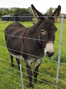 A friendly Donkey at Kingmoor on the 16th August 2013