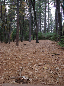 Condon Park, Grass Valley, CA 11-30-2010 Fourth Tee