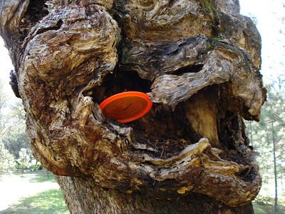 Disc Golf - Hanging Oaks 03-09-2011