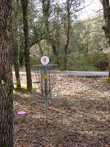 Hanging Oaks, Penn Valley, California 01/12/2011
