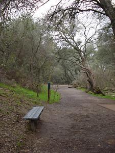 Shady, Oaks, Orangevale, California 01/12/2011