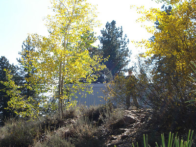 Truckee Regional Park 10/19/2011 Find Moses' bright yellow disc in the aspen...