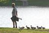 6x4 #294 (ducks like billy)