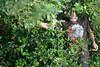 6x4 #1635 (blake in bush)