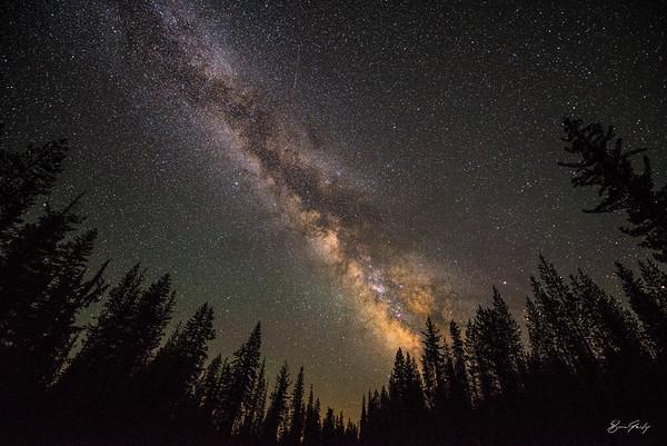 Galactic Trees