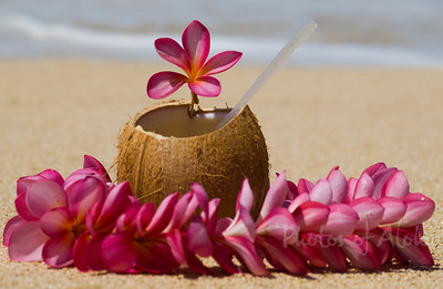 Sunset BeachCoconut drink with a pink plumeria flower lei  Sitting on a lava rock at the beachNorth Shore of O'ahu