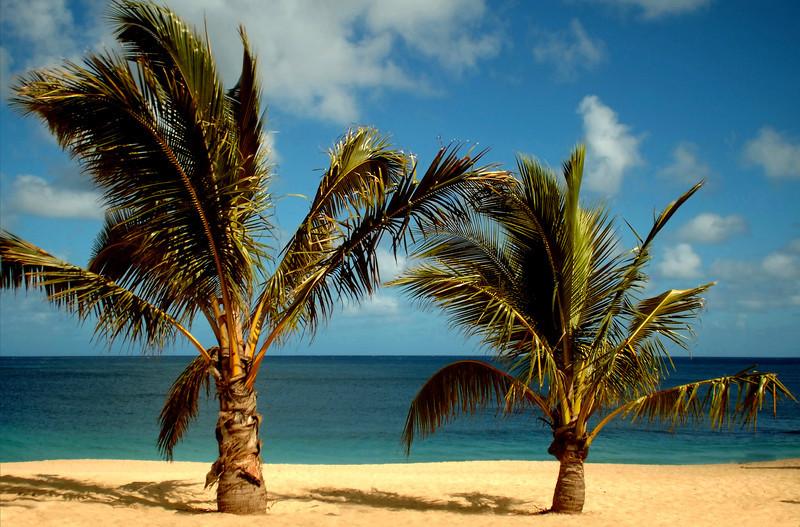 Sunset Beach  Palm trees  North Shore, Oahu, Hawaii  January, 2007