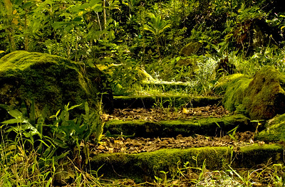 Moss covered tree stairs Waimea Valley North Shore of O'ahu, Hawai'i