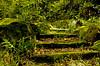 Moss covered tree stairs<br /> Waimea Valley<br /> North Shore of O'ahu, Hawai'i