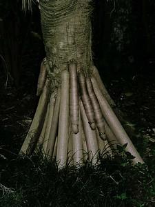 Tree trunk  020404