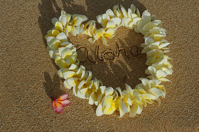Yellow and white plumeria lei with the word aloha inside the Heart-shaped lei on a the beach with a pink plumeria to the side   North Shore, Oahu, Hawaii
