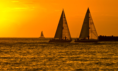 Silhouettes of sailboats as they head for the harbor at sunset  Waikiki, Hawai'i