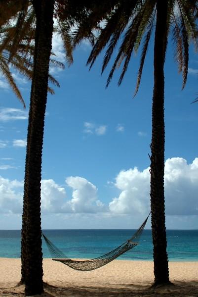 Hammock between Two Coconut Palm Trees at Sunset Beach <br><br>North Shore of O'ahu, Hawai'i