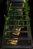 Fern Staircase, green grows well in the tropics ~<br /> <br /> North Shore, Oahu, Hawaii