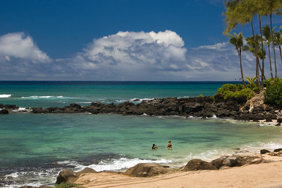 Laniakea Beach is also called Lani's and Turtle BeachLots of Limu (seaweed)North Shore, O'ahu, Hawai'i