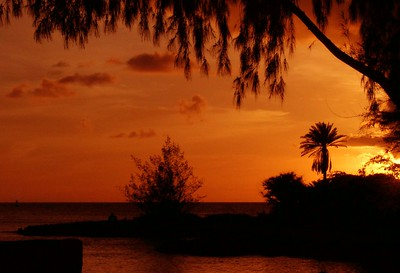 Silhouettes of a palm trees at sunset June 14, 2003  North Shore, Oahu, Hawaii