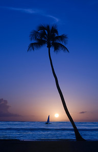 Sailing into the Ocean Sunset, passing a lone coconut palm tree at Sunset Point North Shore of O'ahu, Hawai'i