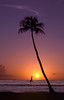 Sunset Silhouettes<br /> Sunset Point palm<br /> May