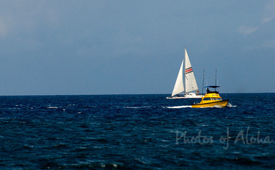 White Sailboat passing a yellow boat  Ali'i Beach near Hale'iwa Harbor
