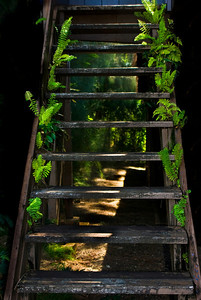 Wooden Staircase sprouts ferns TotallyTropical  North Shore, Oahu, Hawaii