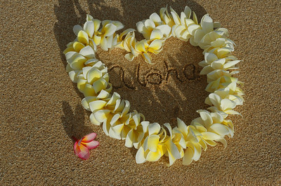 Plumeria Yellow and white plumeria lei with the word aloha inside the Heart-shaped lei on a the beach with a pink plumeria to the side   North Shore, Oahu, Hawaii
